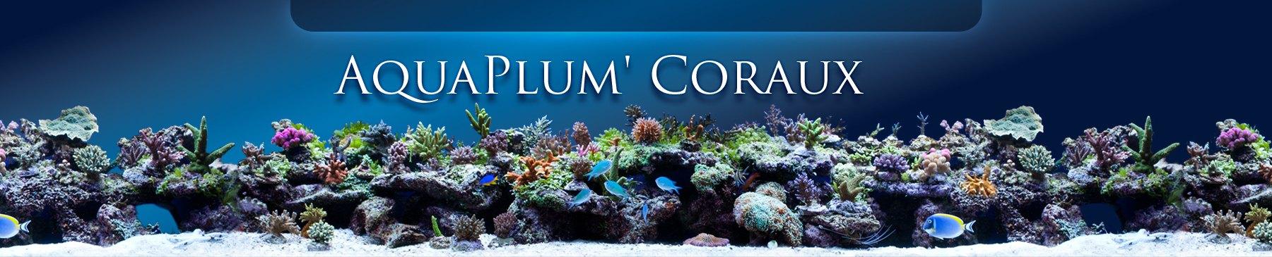 Aquaplume coraux et bestoffres-shop.com