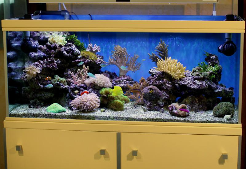 Aquarium Economique