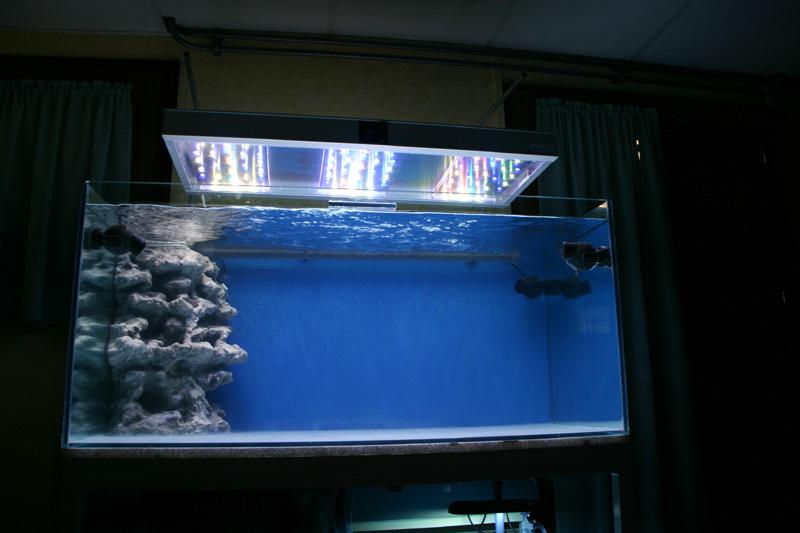 Choix de l'éclairage d'un aquarium Luc%202