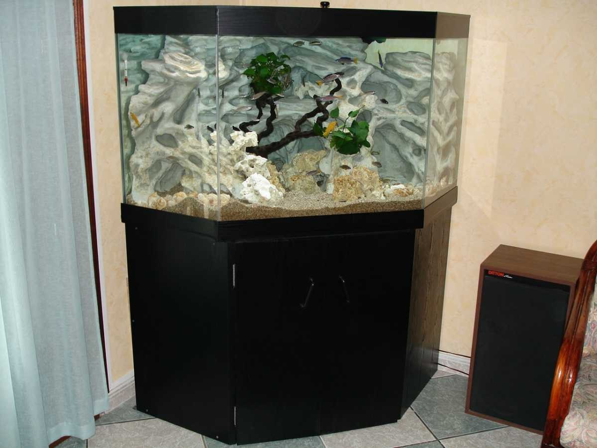 aquaplum 39 coraux fabrication d 39 aquariums. Black Bedroom Furniture Sets. Home Design Ideas